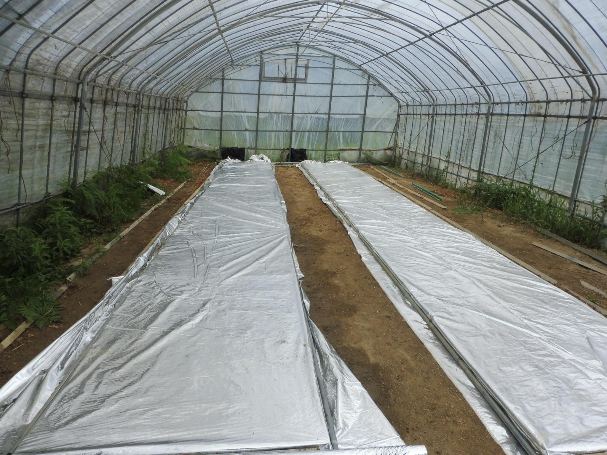 暑さに弱い苗の「苗焼け」を防ぐために育苗シートを被せていきます。一定の温度以上の温度上昇を防ぐため、予想以上の高温になることを防いでくれます。