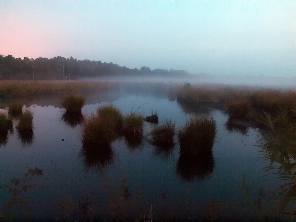 Venn-2009-09-19---1---Nebelstimmung
