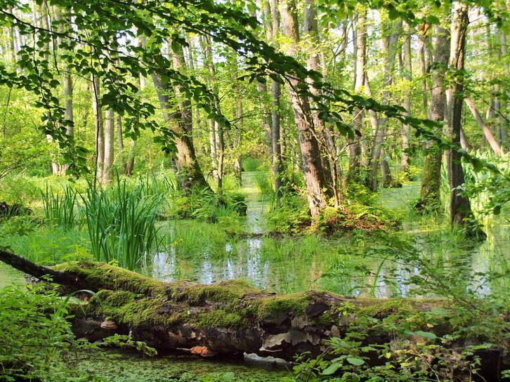 """Waldgewässer beim """"Langen Berg"""""""