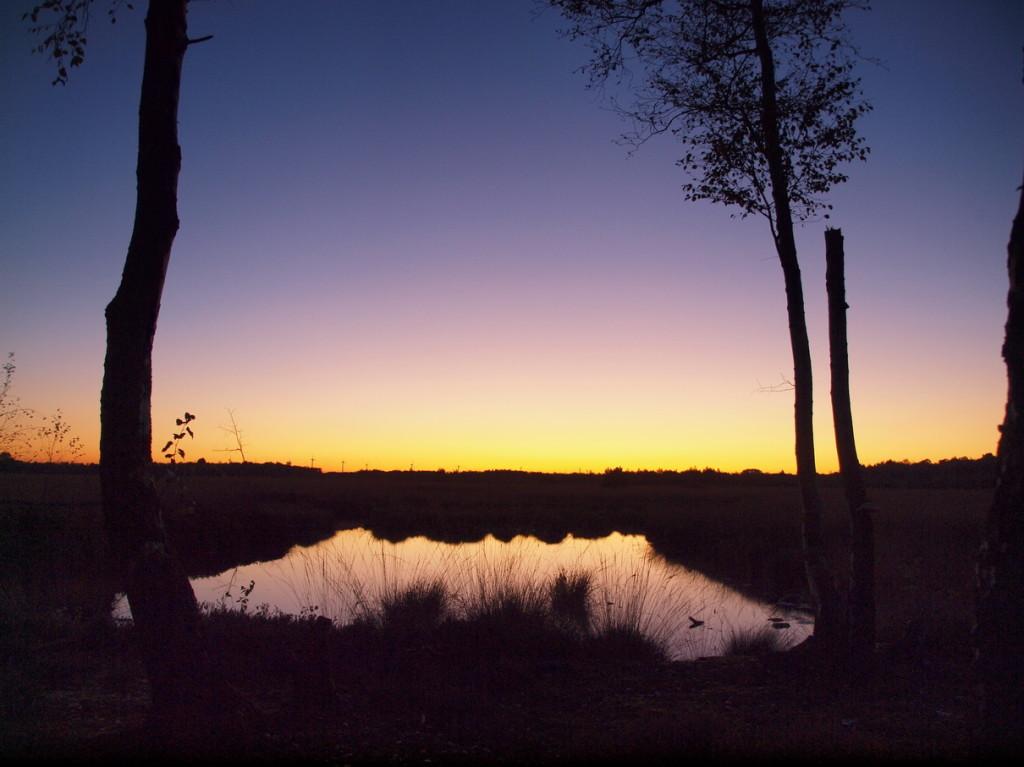 Venn-2009-10-14---1---Abendlicht