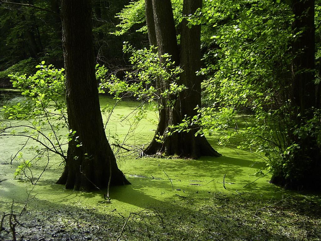 Lauenburgische Seen - 2004