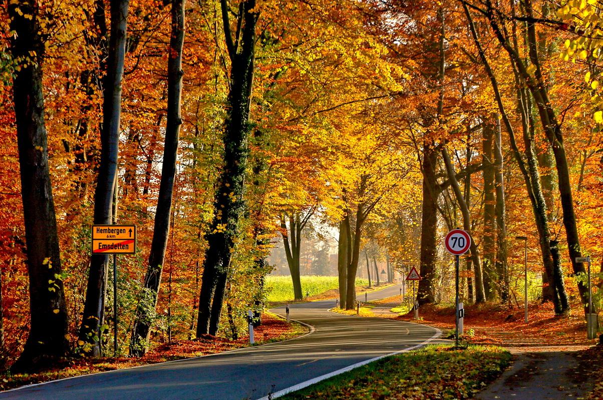 2018-11-01---1                 Herbst-Landschaft-Hansastr.-Hemb.