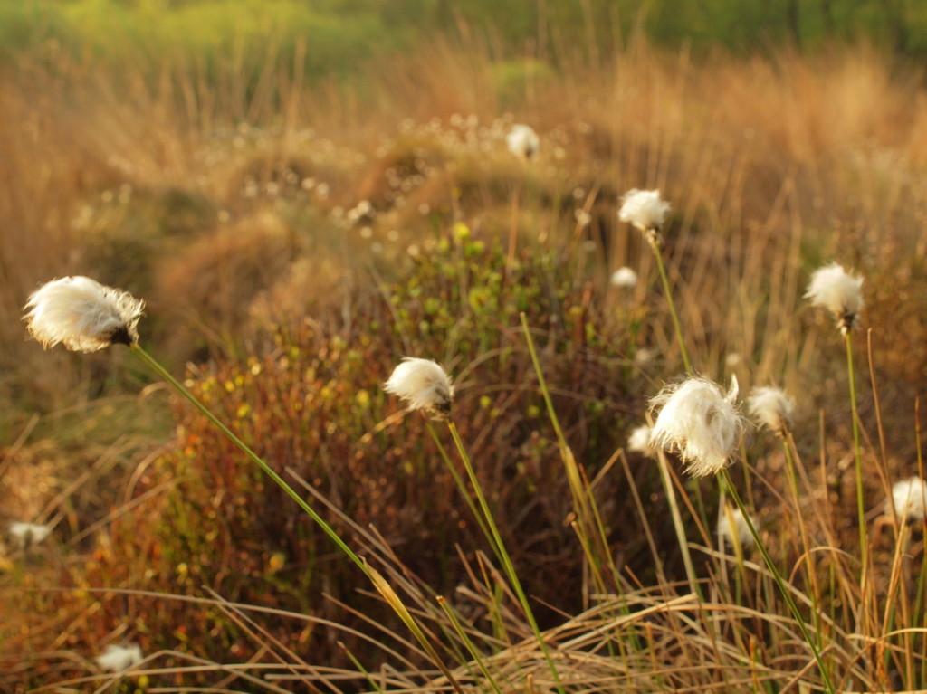 Venn-2010-04-30---5             Frühling