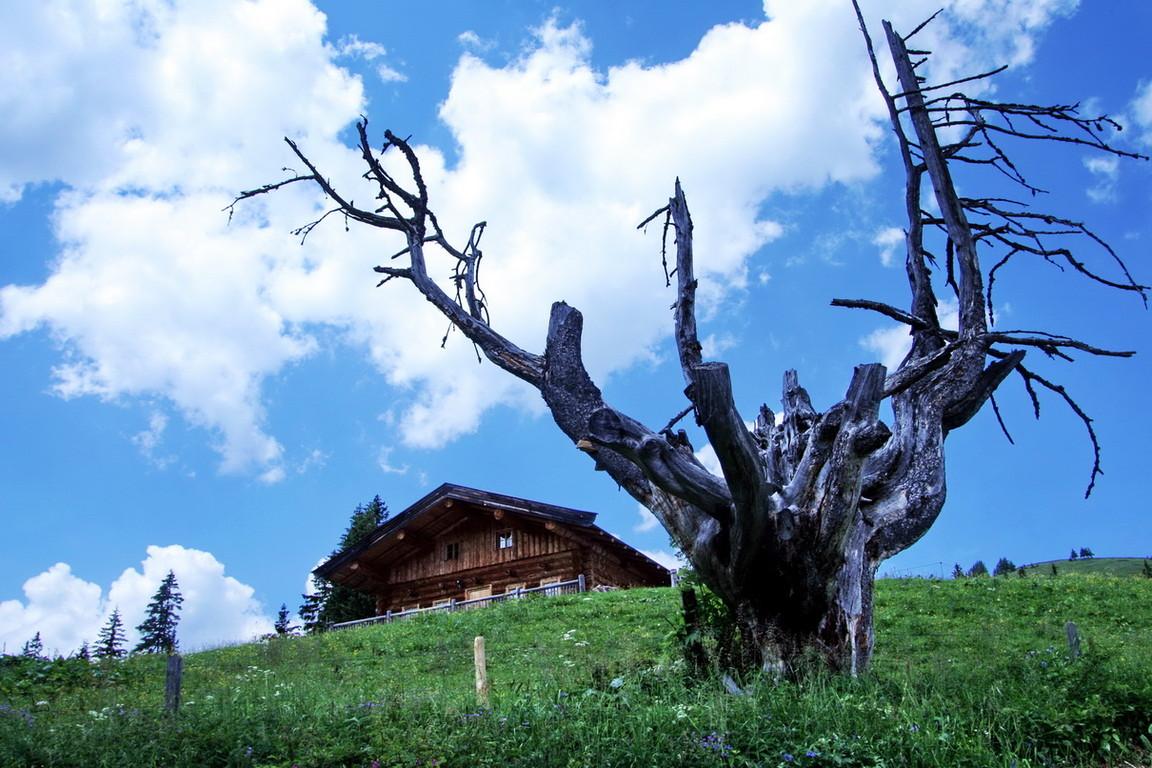im Salzburger Land bei Lofer - 2008