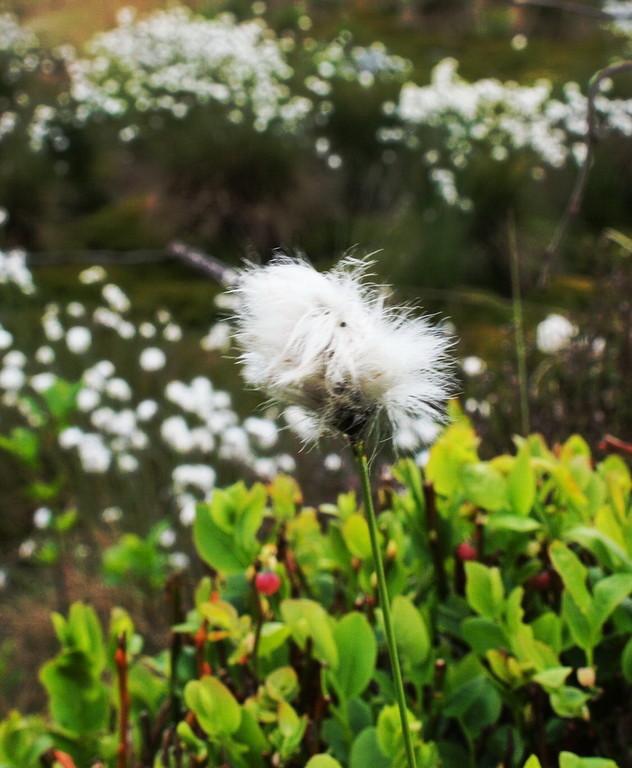 Venn-2009-04-27----6