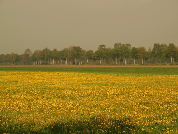 Venn-2010-04-30---1          Frühling