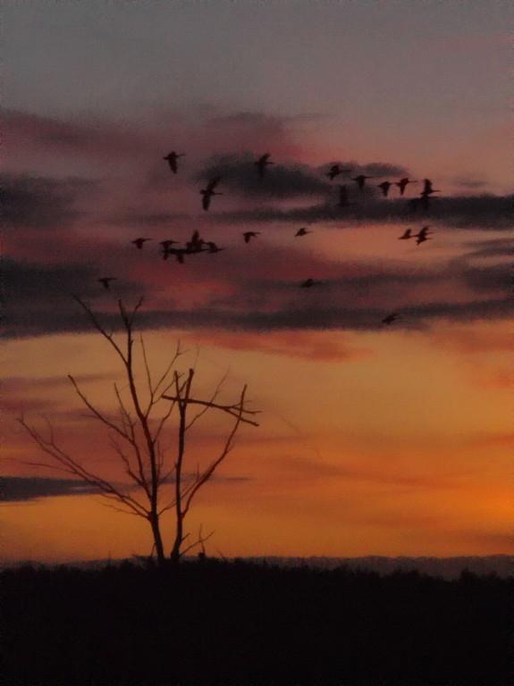 Venn-2009-10-01---7---Abendlicht-Wildgänse