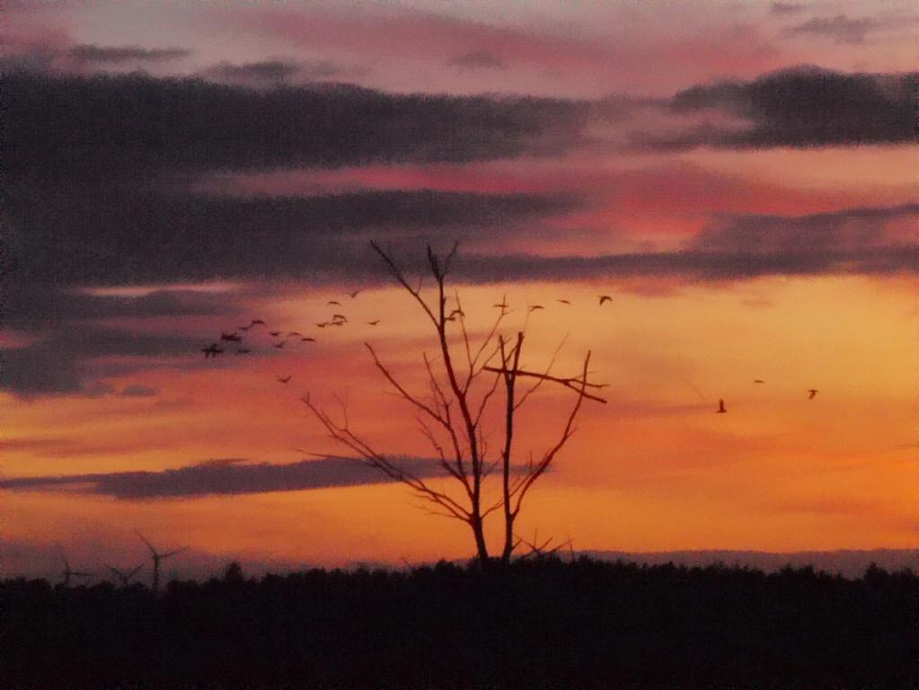 Venn-2009-10-01---6---Abendlicht-Wildgänse