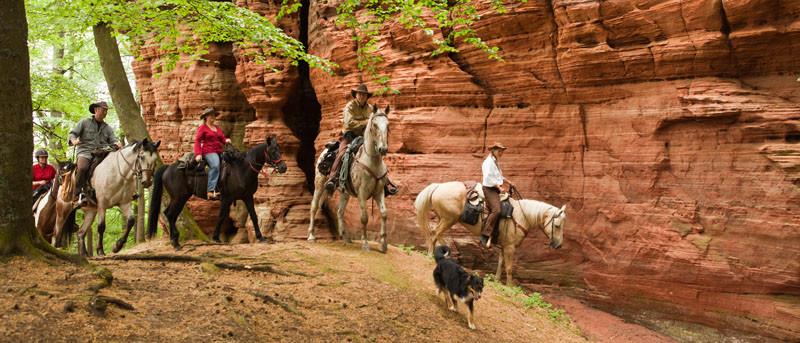 RossFoto Dana Krimmling Pferdefotografie Wanderreiten Freiberger Pferde