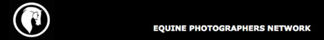 RossFoto Dana Krimmling Pferdefotografie Fotografien vom Wanderreiten, Westernreiten, Jagdreiten, Kavallerie, Reenactment, Freiberger Pferde, Equipe Photographers Network