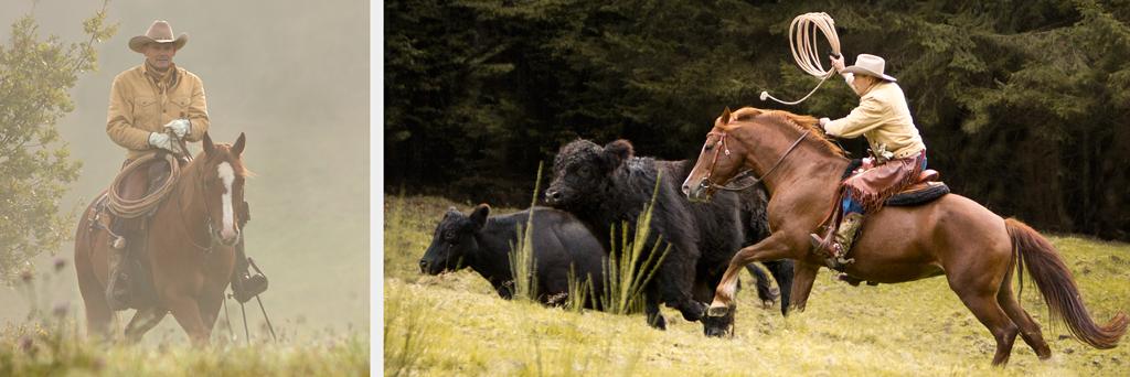 RossFoto Dana Krimmling, pferdefotografie; fotografie; freizeitreiten; westernreiten; wanderreiten; jagdreiten; cutting, westernpferd, westernhorse, cowhorse, reining, cowboy, vaquero