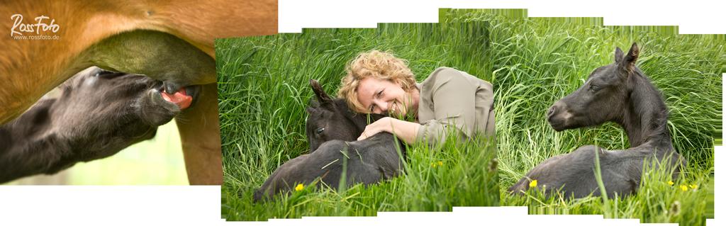 RossFoto Dana Krimmling, Pferdefotografie, Quarter Horse Fohlen, Stute auf Weide, Weidehaltung, schwarzes Fohlen, artgerechte Haltung von Pferden