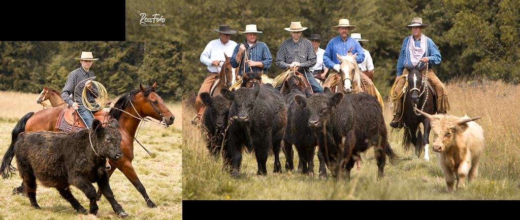 RossFoto Dana Krimmling Cowcamp Vaqueros 2014, pferdefotografie, fotografie, westernreiten, freizeitreiten, cutting, reining, cow horse, western horse, pferd, westernpferd, quarter, paint, saddlery, fey, rieser, kay wienrich, westernausbildung, cow sense