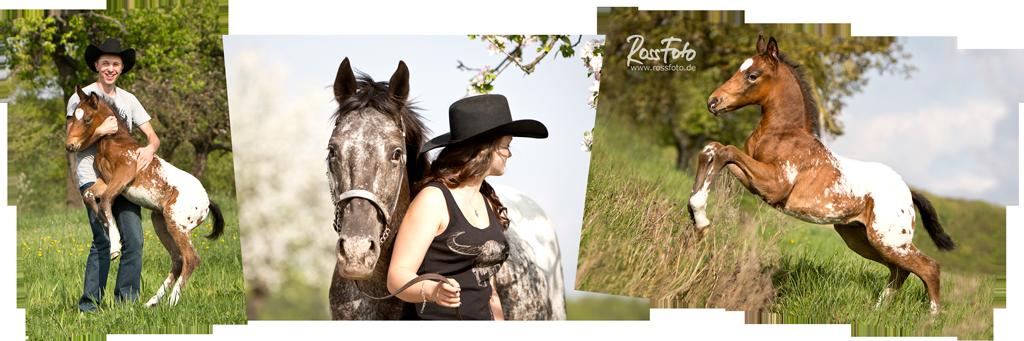 RossFoto Dana Krimmling, Pferdefotografie, Fotografie vom Wanderreiten, Westernreiten, Fohlen, Fohlengeburt. westernreiten, appaloosa, wersternhorse,