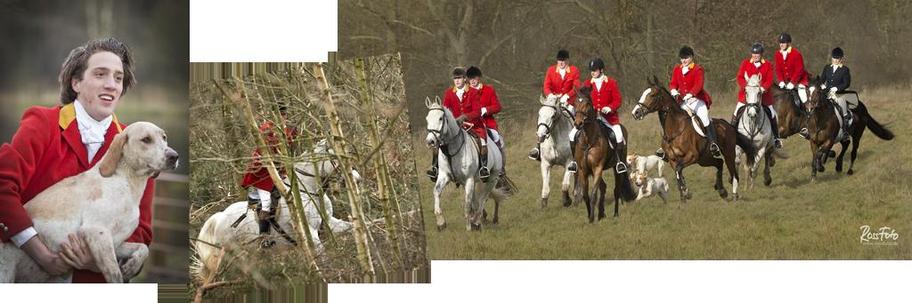 rossfoto, dana krimmling, pferdefotografie, westernreiten, wanderreiten, kavalleriereiten, reiten, jagdreiten, rote jagd, schleppjagd, veluwe hunt, meute, hundemeute