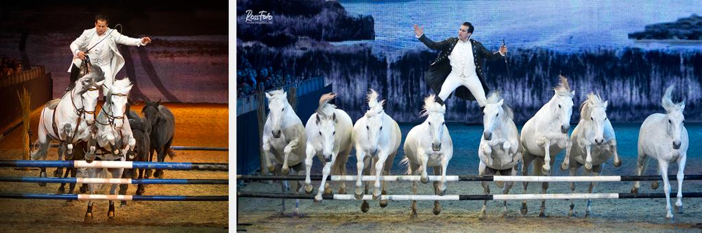 RossFoto Dana Krimmling Pferdefotografie Fotografie wanderreiten, jagdreiten, Stunt, Lorenzo Horseshow, freiheitsdressur, Frankreich, Equitana 2015