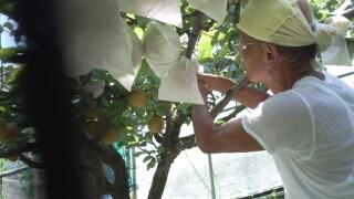 果樹園のオーナー 鈴木さん、決して販売はしません。