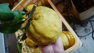 獅子柚子は鬼柚子とも呼ばれ、マーマレードなどの材料です。