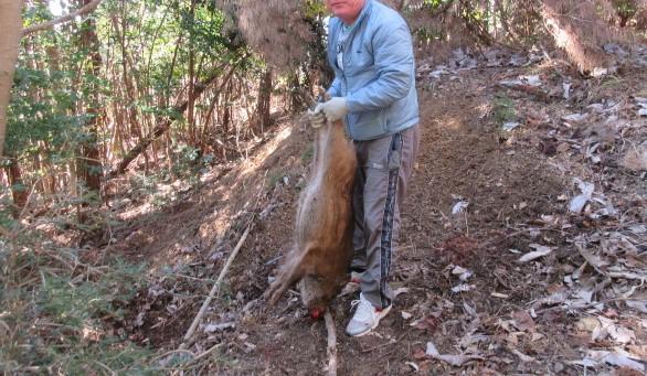 罠猟で初の獲物