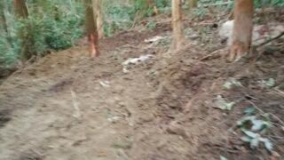 くくり罠に掛かった猪が一晩のうちに掘り起こす土砂は大変な量です。