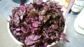 赤紫蘇を洗って塩であく抜きをします。