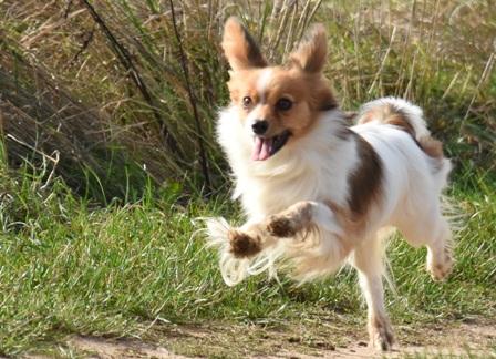 Hund Mail Kontakt Datenschutz Impressum