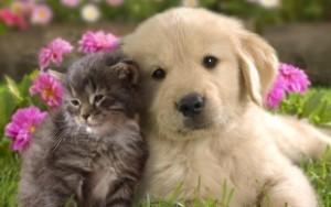 Chien et chat s'entendent à merveil