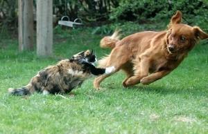 Mésentente entre chien et chat