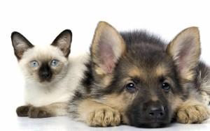 Chiot et chat qui s'entendent