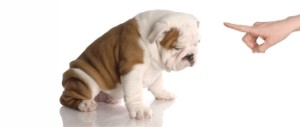 Education du chien à domicile