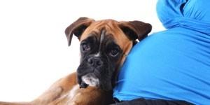 Préparer votre chien à l'arrivée de bébé avec dogs-solutions
