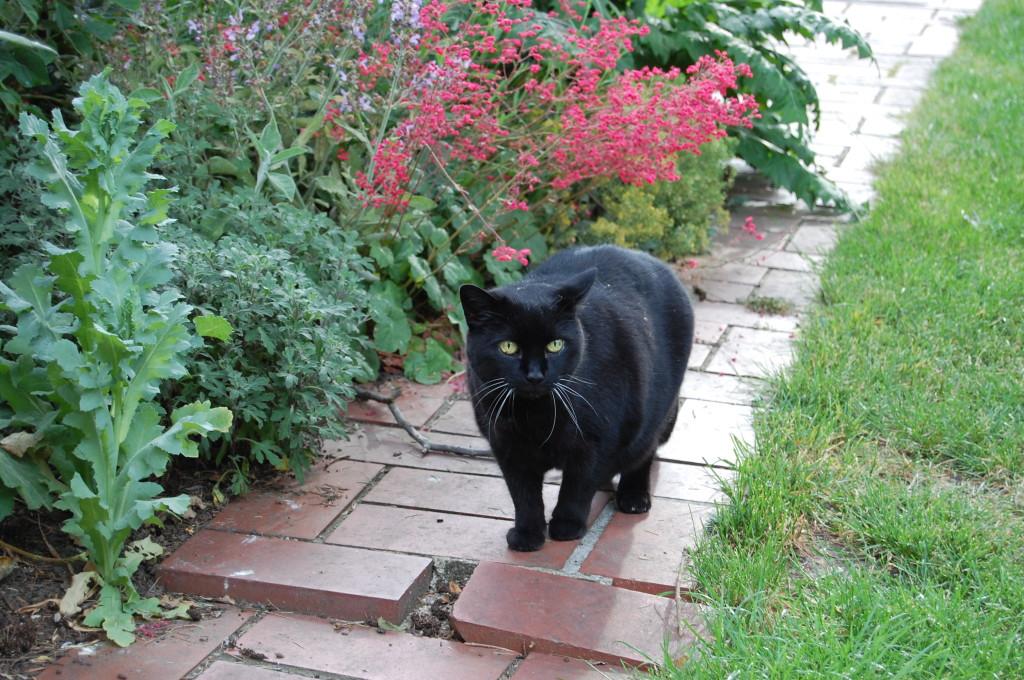 Erinnerung an Kitty  (17 Jahre)