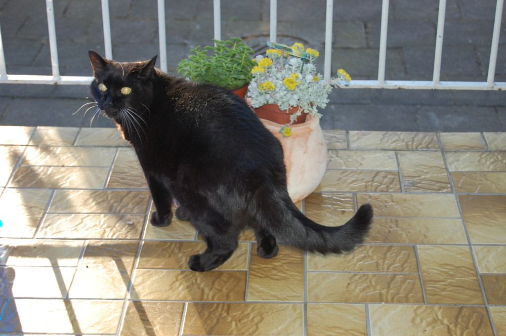 Erinnerung an Kittty  (17 Jahre)