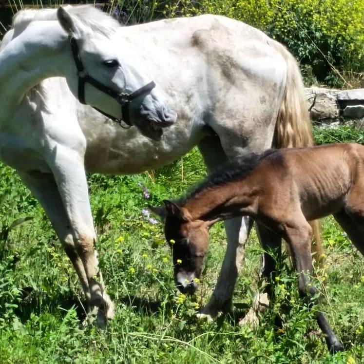 Menudo solazo para salir a pasear con el bebé. Bimba super Mami. #elcaballodebronce #Riopar @ch_caballodebronce