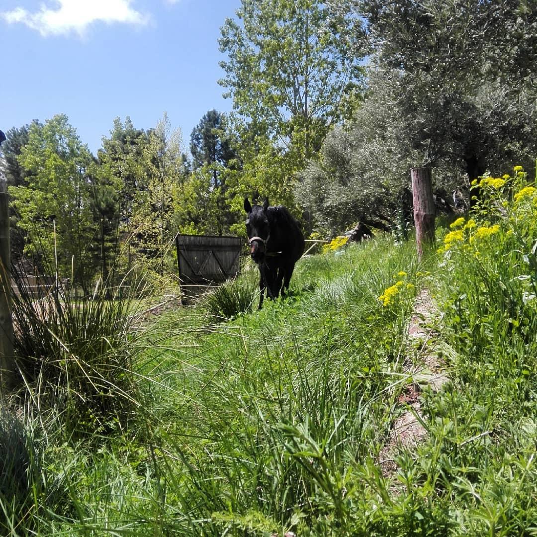 Hoy hemos contratado de jardinera a #Lola #elcaballodebronce #soldeverano #Riopar