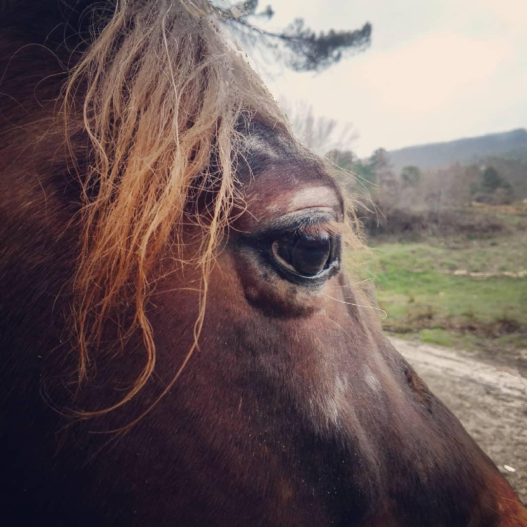Vitíligo en caballos? Si, así es. Y en casa tenemos al más guapo de todos! #elcaballodebronce #modelovitiligo