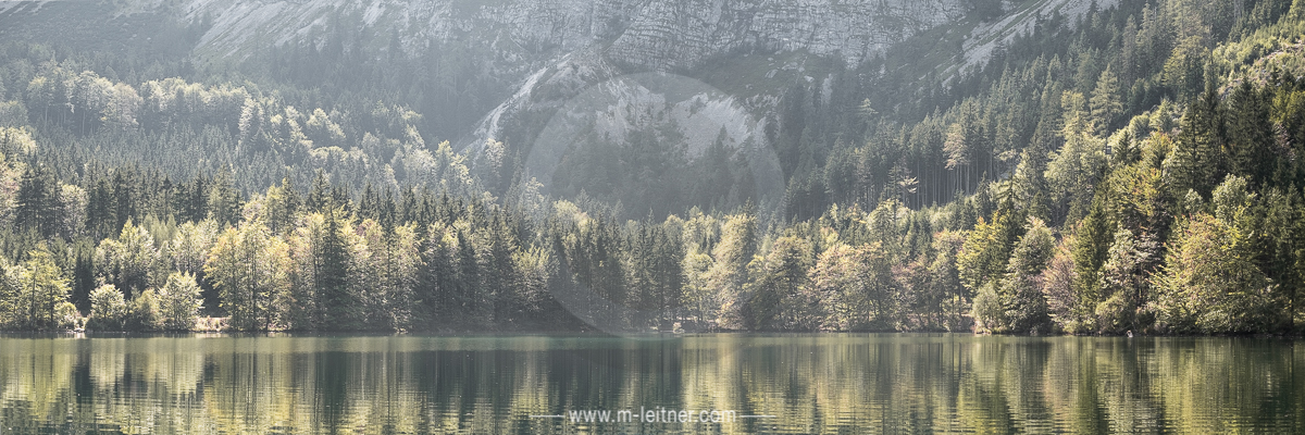 """""""trees"""" - langbahtsee salzkammergut - size XL - picture ID 215024"""