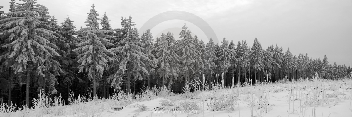 forest winter - mühlviertel - picture ID P9599 ART XL