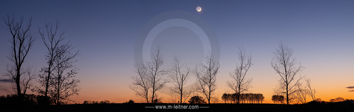 """moon & trees"" - scharten - size XL - picture ID 225824"