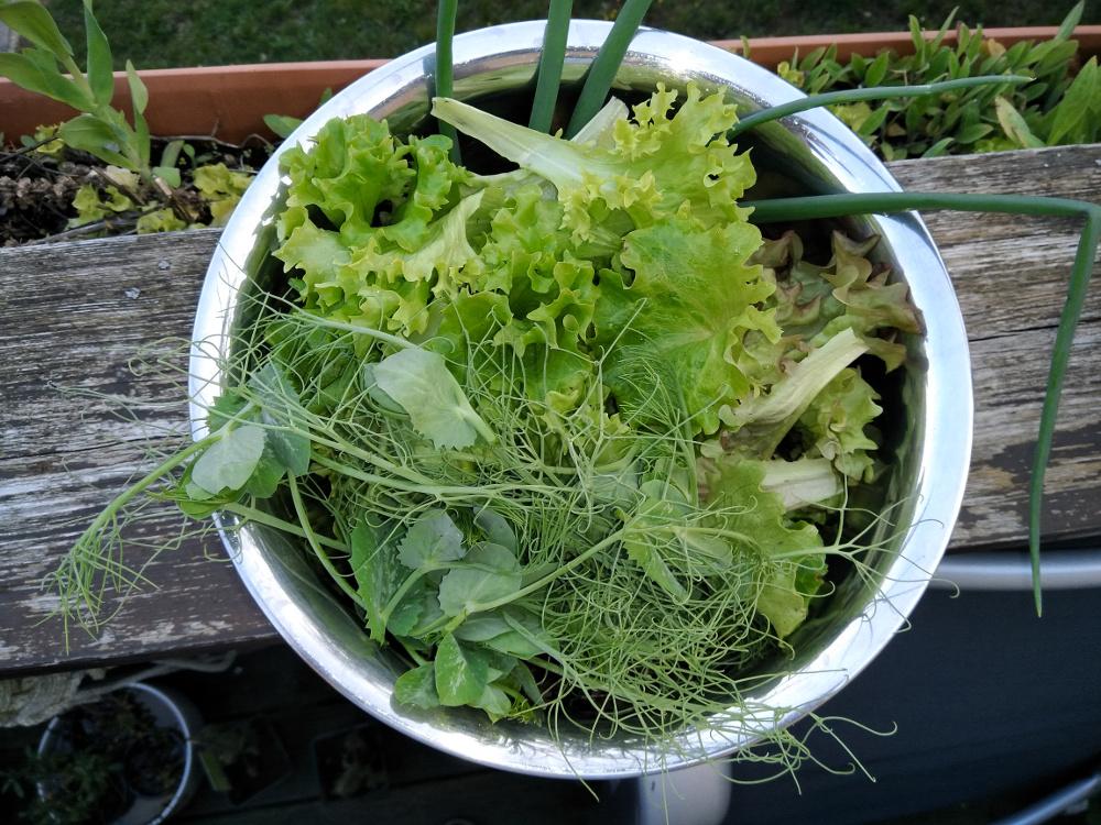 Salat selber anbauen? Ohne Garten? Aber klar ...