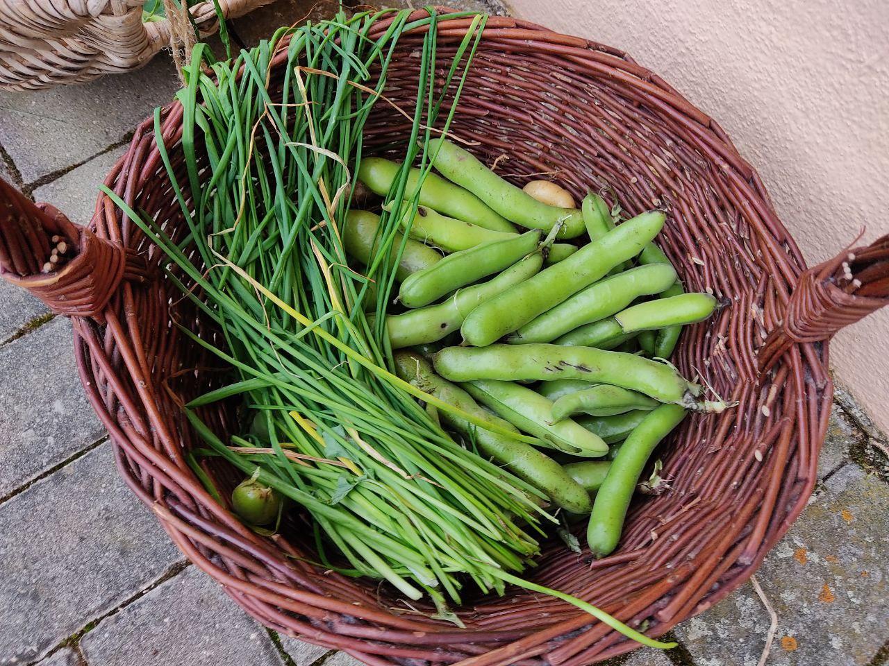 Lebensmittel selber anbauen - warum?