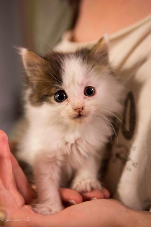 chaton Gargilessois
