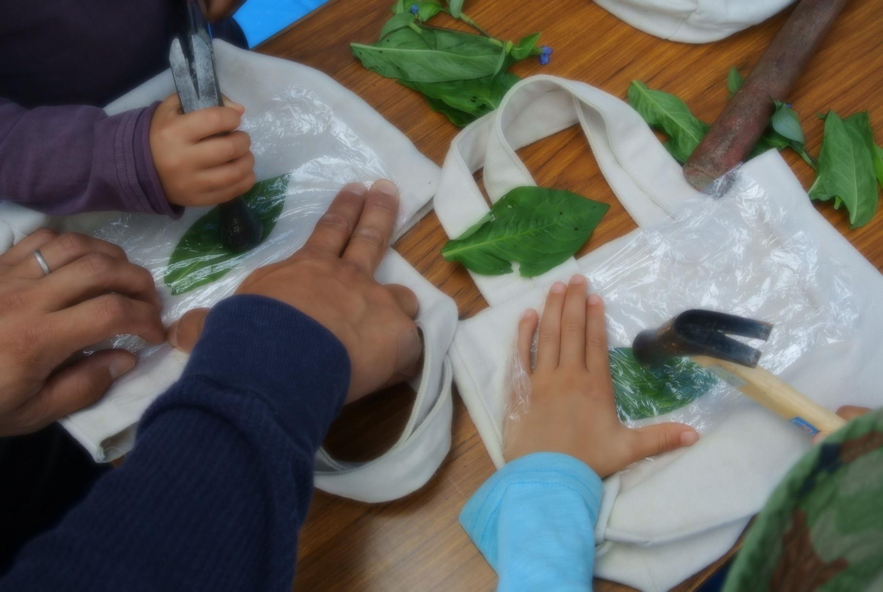 藍の葉は、たくさんの人が活用してくれました。森の幼稚園の子供たち。