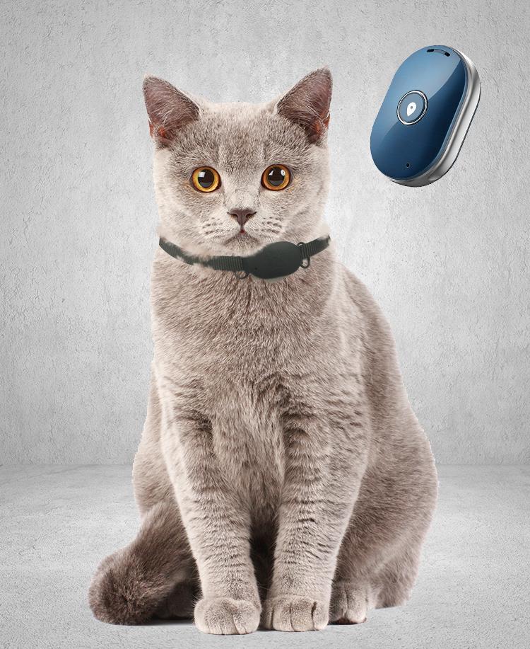 Katzen Chip Auslesen App