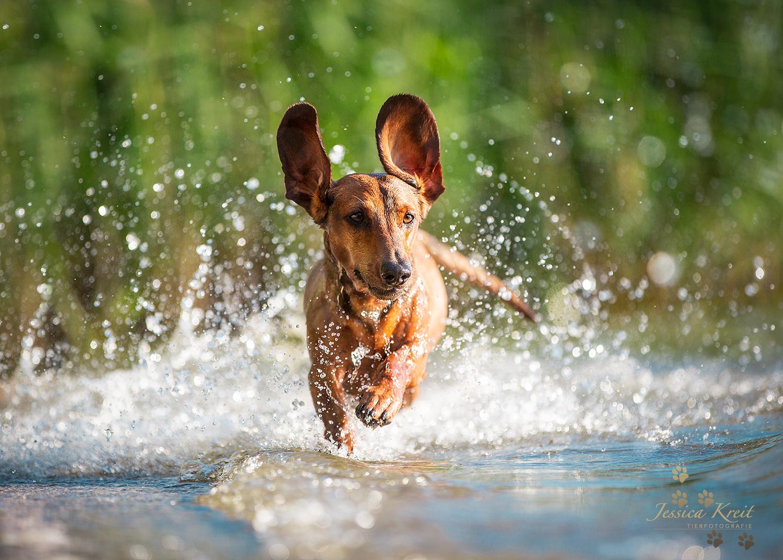 'Wasser Action'