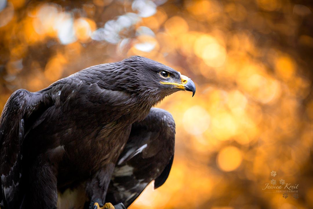 Wildtier-Fotografie im Wildpark Müden