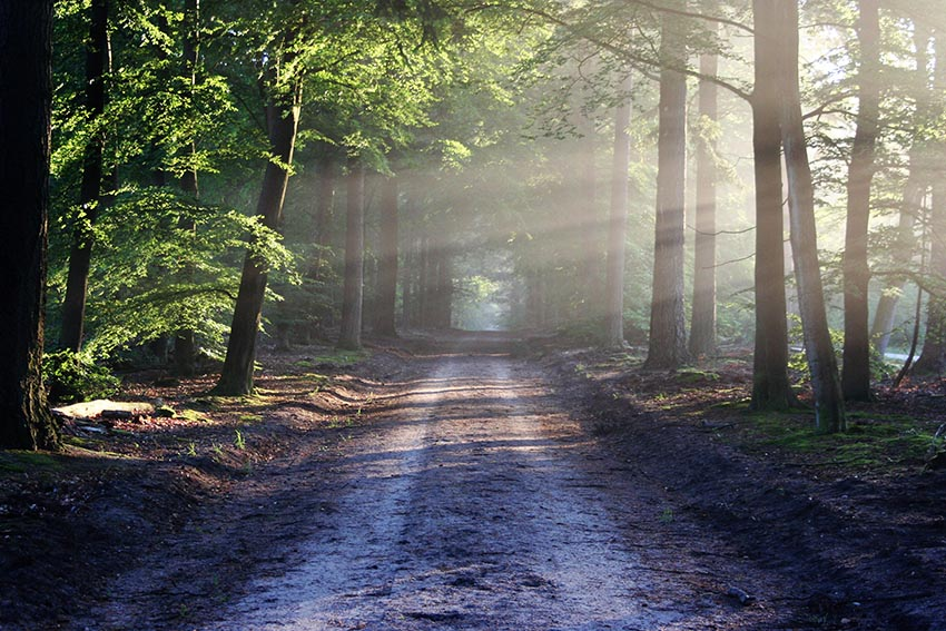 Hackschnitzelheizung, regenerative Energie, Nachhaltig, Wald