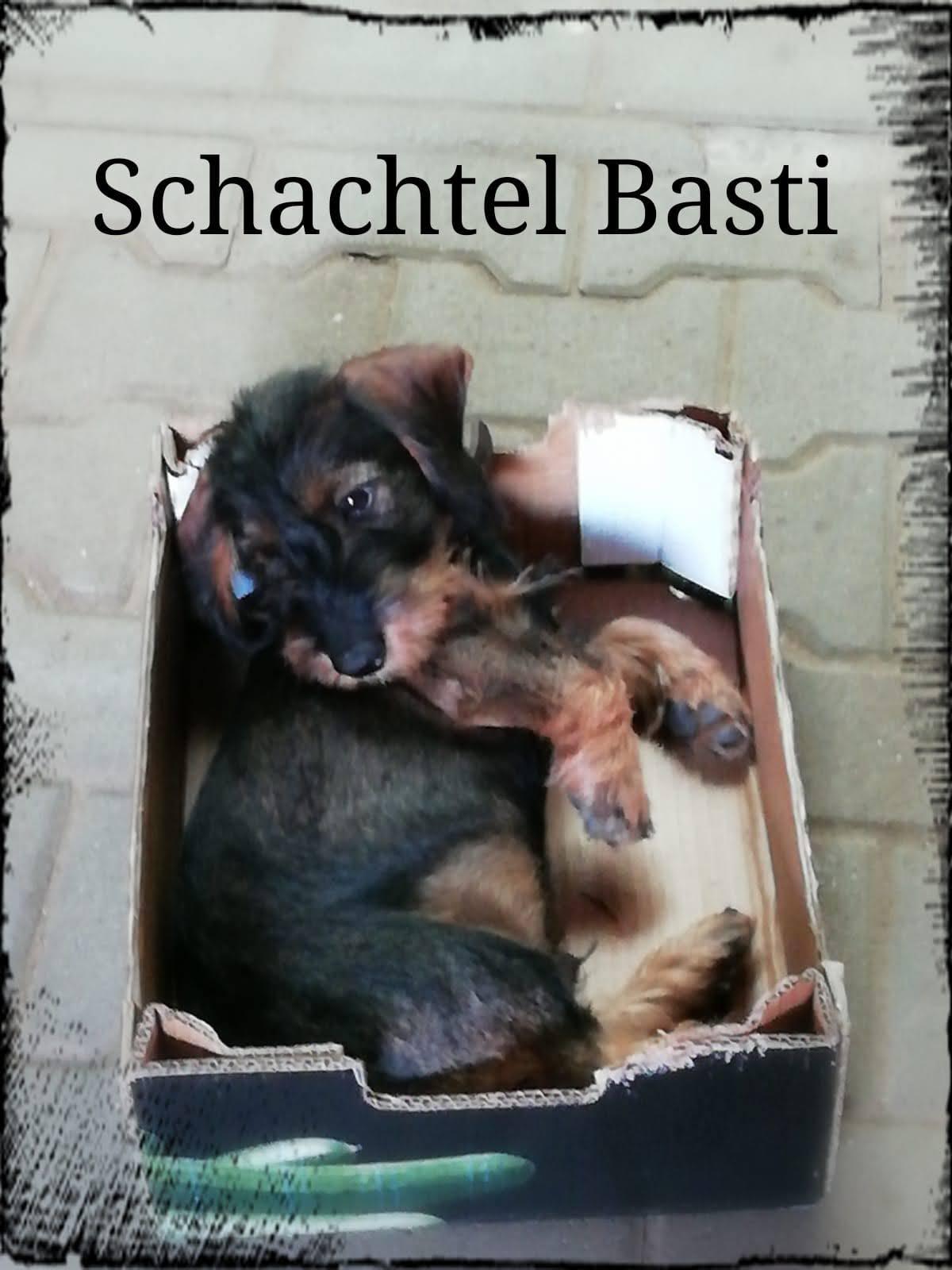 Da Basti passt sogar in eine Schachtel -- unser Schachlbasti