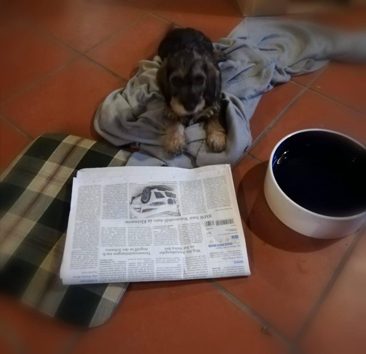 Elli liest die neusten Corona Nachrichten. Leider immer noch keine Hundekurse