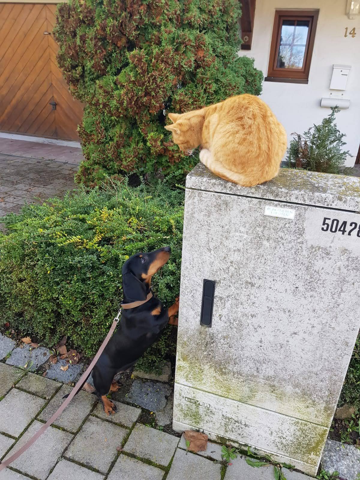 Bubi hätte nur zu gerne die Katze erreicht